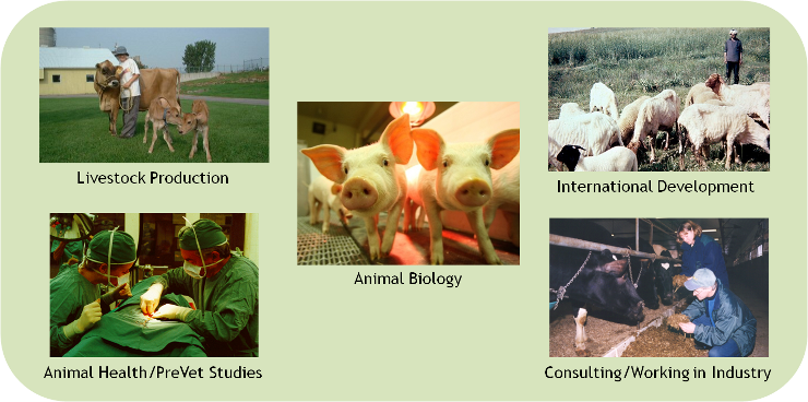 Animal Science offered