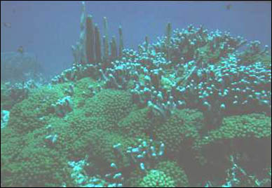 Coral found near the Bellairs Research Institute.
