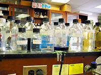 what is biochemistry? | biochemistry - mcgill university, Cephalic Vein