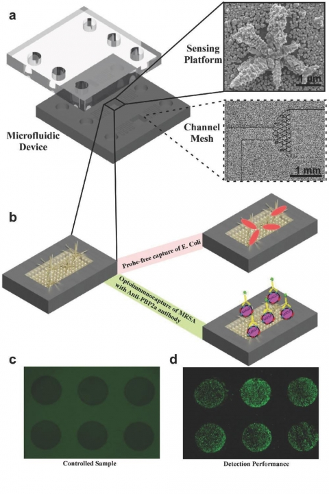 Schematic illustration of an integrated fluidic device for selective capture and analysis of bacteria.