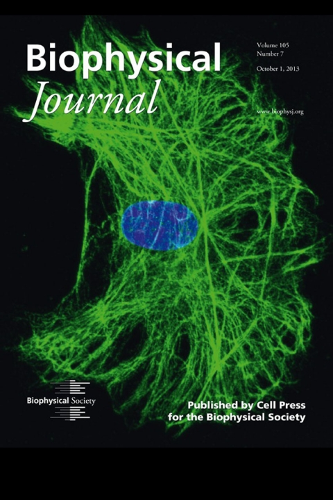 Image from Dr. Allen Erlicher's research on the cover of the Biophysical Journal (October 2013)