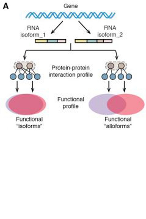 Figure from article showing comparative functional profiling of alternative isoforms