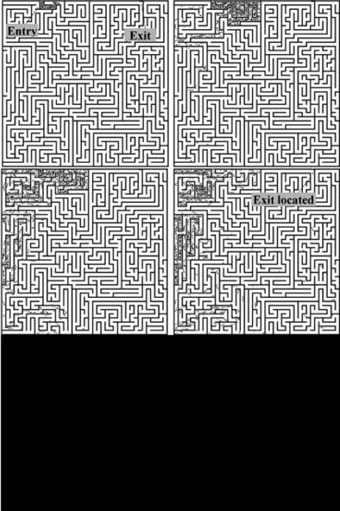 Figure showing fungi going through a maze