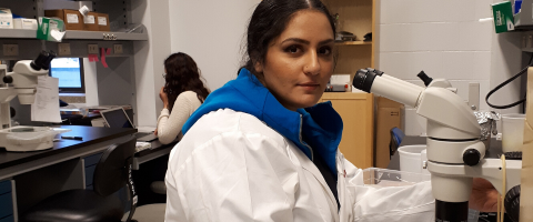 researcher sitting at a microscope in a lab coat