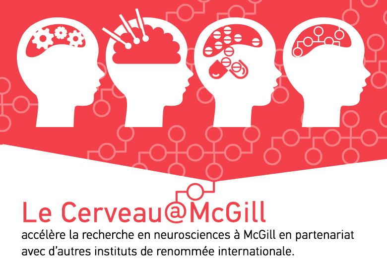 Le cerveau mcgill mcgill university for Le cerveau en miroir
