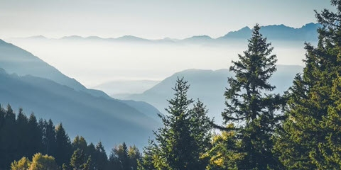 mountain top and trees