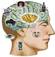 cognitive science program mcgill university