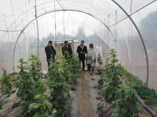 Observing the tunnel farmingmechanism on seasonal yields