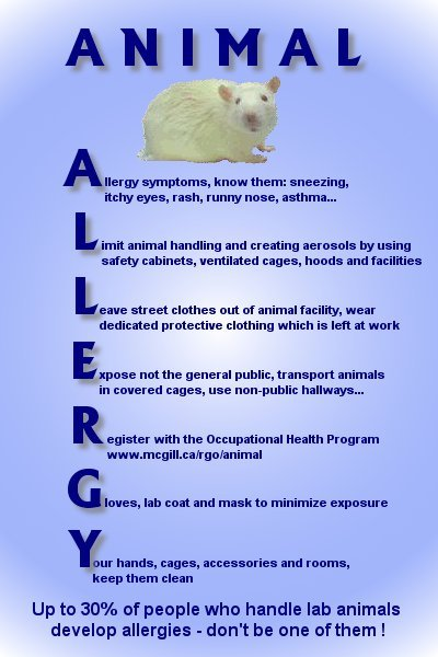A poster about allergy safety when working with animals