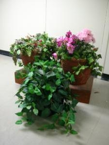 Moyse Hall props - Plants and Flowers