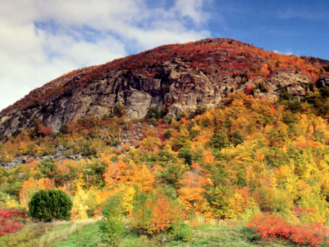 fall colours in trees on a rocky outcrop of a hill