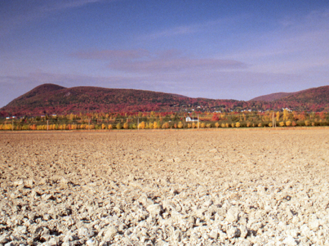 view of a isolated hill with trees in fall colours. Dusty field in the foreground.