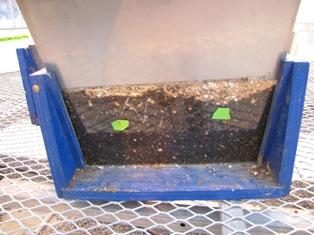 Observation of different fertilizer treatments on corn root development
