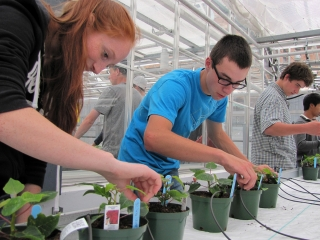 Ag Botany students grow pointsettias