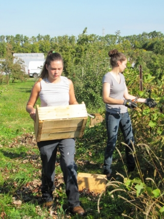 second year students harvest grapes on campus