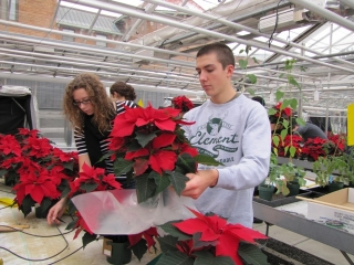 students grow poinsettias as a fundraiser
