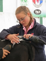 Marie-Pier Proulx (year 2 student) participating in the 4-H fitting competition
