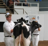Brandon Maither (Year 2) showing in the 4-H show