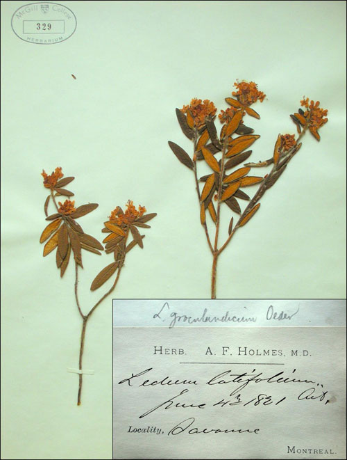 Mcgill university herbarium historical collections mcgill university - Model herbarium ...