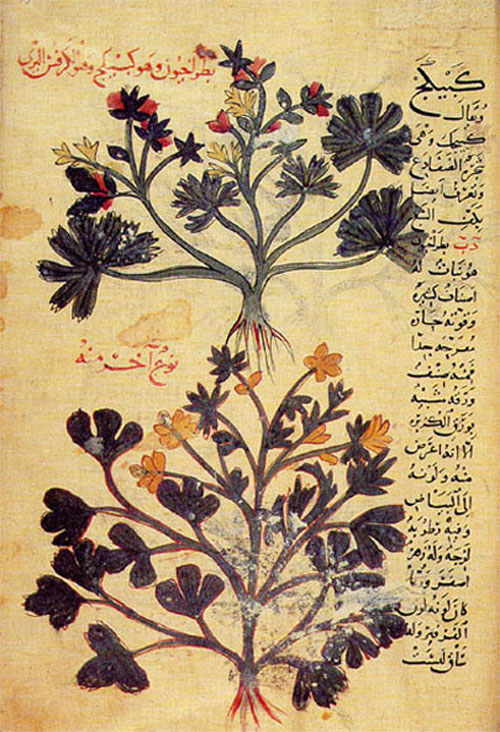 Ancient islamic medicine