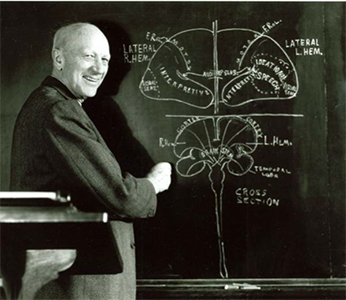 Wilder Penfield in 1963, sketching a cross section of the human brain (unattributed).  Osler Library (Photography Collection).