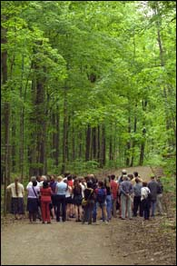 The Morgan Arboretum is Montreal's oldest growth forest.