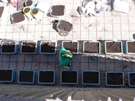 Creation of the Edible Campus at McGill, May 19, 2007