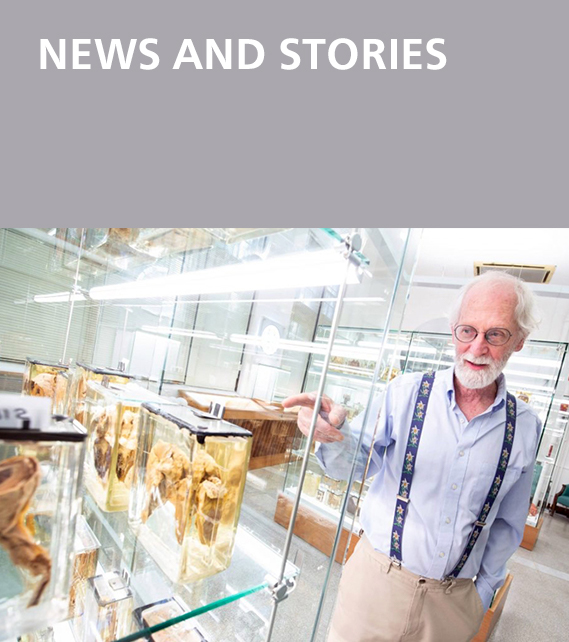 News and Stories