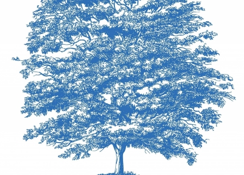 Blue, large oak tree representing MORSL branding.