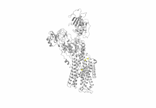 3D representation of the protein encoded by the ATP1A3 gene. Yellow markers correspond to the mutations identified in childhood-onset schizophrenia cases in the study.