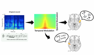 Figure shows original song (bottom left) and its spectrogram (above it, in blue). This spectrogram can be decomposed according to the amount of energy contained in spectral and temporal modulation rates (central panel). Auditory cortex on the right and left sides of the brain (right side of figure) decode melody and speech, respectively, because the melody depends more on spectral modulations and the speech depends more on temporal modulations.