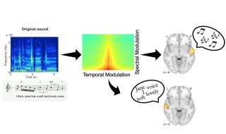 La figure montre la chanson original (en bas à gauche) et son spectrogramme (au-dessus d'elle, en bleu). Ce spectrogramme peut être décomposé selon la quantité d'énergie contenue dans les taux de modulation spectrale et temporelle (panneau central). Le cortex auditif du côté droit du cerveau décode la mélodie, tandis que celui du côté gauche du cerveau décode les paroles (à droite) parce que la mélodie dépend davantage des modulations spectrales et les paroles, des modulations temporelles.