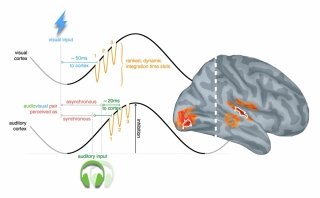 MEG signals revealed that recalibration was enabled by a unique interaction between fast and slow brain waves in auditory and visual brain regions.