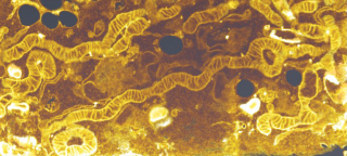 Mitochondria drive cell survival in times of need