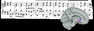 Les chercheurs ont découvert une corrélation entre les erreurs de prédiction de la récompense et l'activité dans le noyau accumbens, une région du cerveau qui, comme l'ont montré des études précédentes, est activée lorsque le sujet ressent un plaisir musical.