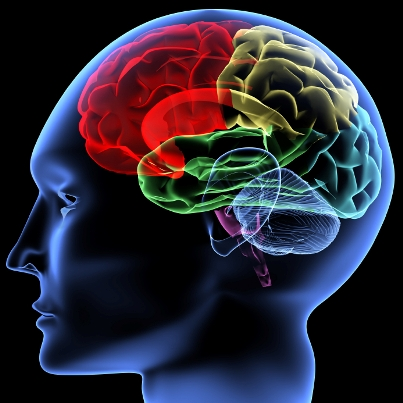Neuroscience what is the most passed college subjects