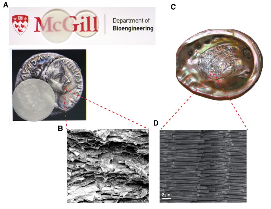 (A) Glass composite (without index-matching strategy on left and with index-matching on right), (B) Glass composite's microstructure, (C) View of the nacreous layer in red abalone shell, and (D) Nacre's microstructure.