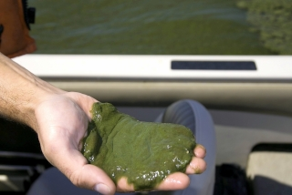 Photo courtesy of: Dr. Ron Zurawell, Ph.D., P.Biol. Limnologist/Water Quality Sp