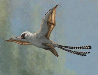 Figure 1: Life reconstruction of the bat-winged scansoriopterygid dinosaur Ambopteryx in a glide. Image credit: Gabriel Ugueto. // Figure 1 : Reconstitution d'Ambopteryx, dinosaure à ailes de chauve-souris du groupe des scansorioptérygidés, en vol plané. Image : Gabriel Ugueto