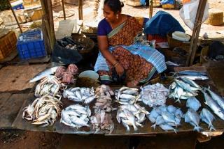 Locally-caught seafood for sale at a roadside market in Goa, India in February 2013 // Fruits de mer pêchés localement et vendus sur un marché de bord de route à Goa, en Inde, en février 2013.