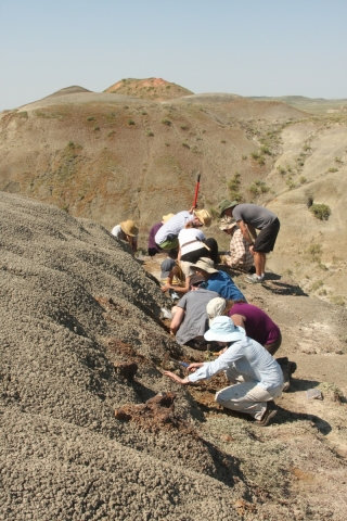 McGill field crew collecting fossils as part of a field course in Grasslands Nat