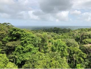 Panama's forest canopy (Colón, Panama). Credit: Camilo Alejo   La canopée forestière du Panama (Colón, Panama). Photo : Camilo Alejo