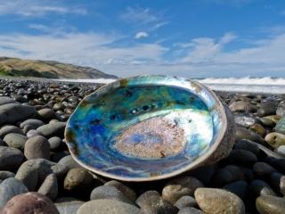Shiny nacre of Abalone washed ashore. Credit: Pi-Lens