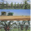 Midwest US: The top painting is based on pre-colonisation Indigenous cities and communities with buildings and a diverse maize-based agriculture. The second is the same area today, with a grain monoculture and large harvesters. The last image, however, shows agricultural adaptation to a hot and humid subtropical climate, with imagined subtropical agroforestry based on oil palms and arid zone succulents. The crops are tended by AI drones, with a reduced human presence. Credit: James McKay, CC BY-ND, The Conv