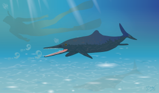 New species of Ichthyosaur discovered in museum collection