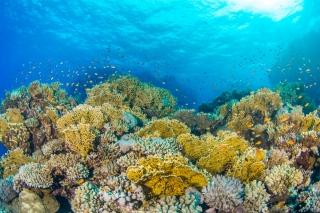 mcgill.ca - Global warming hits sea creatures hardest