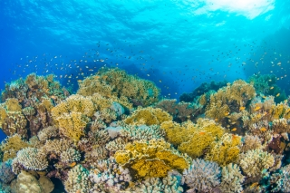 Global warming hits sea creatures hardest