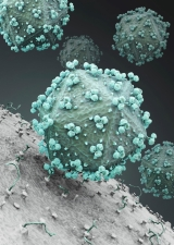 Photo of hiv