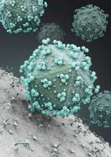 Photo of hiv