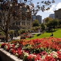 A late summer day on McGill's downtown campus